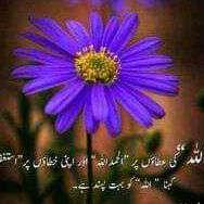 Rana Hameed
